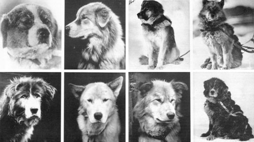 dogs_grid