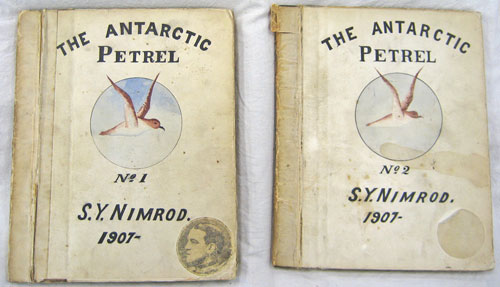 antarcticpetrel-(1)