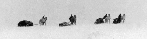 Shackleton_nimrod_ponies