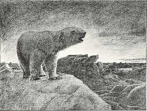 polarbear_nansen