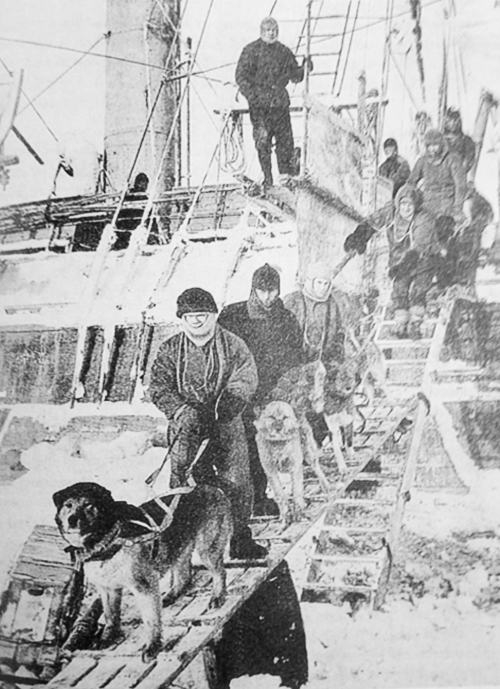 dogs_gangplank