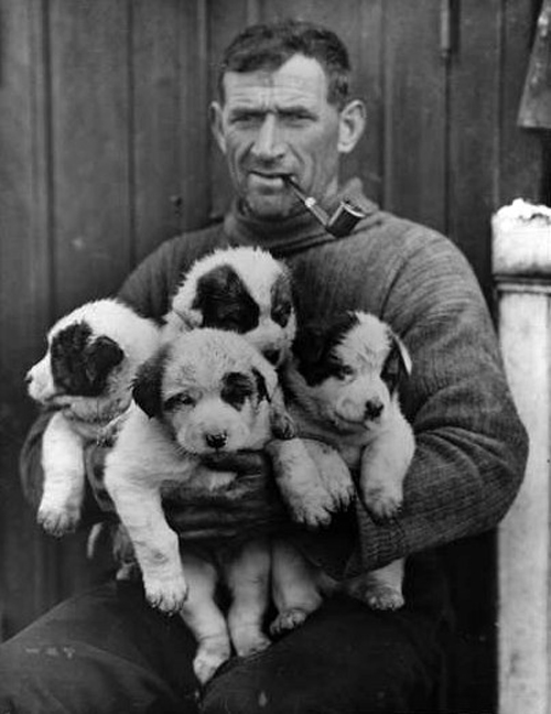 Tom Crean and puppies on the Endurance, 1915